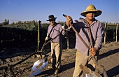 Men with ploughs for tilling the soil, Mendoza, Argentina