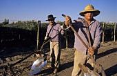 Männer mit Pflügen für die Bodenbearbeitung, Mendoza, Argentinien