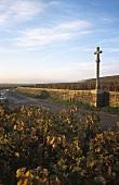 Cross near the Romanée-Conti vineyard, Vosne-Romanée, Côte d'Or