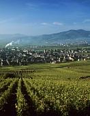 Sigolsheim, Alsace, France