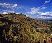 Alvaro Palacios's Clos L'Ermita vineyard, Gratallops, Spain