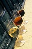 Sherry: Fino, Amontillado, Oloroso, Bodega Gonzalez Byass, Spain