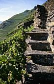 Slate steps in 'Walporzheimer Gärkammer' vineyard, Ahr