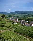 View over vineyards near Achkarren, Kaiserstuhl, Baden