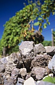 Weathered volcanic rock, 'Ihringer Winklerberg', Baden