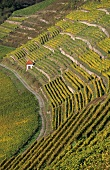A little house in the 'Homburger Kallmuth' vineyard, Franconia, Germany