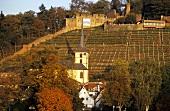 'Klingenberger Schlossberg' Einzellage, Klingenberg, Franconia, Germany