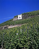 Sundial in vineyard, Mosel-Saar-Ruwer, Germany