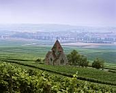 Small church in vineyards, Gau-Bickelheim, Rheinhessen, Germany