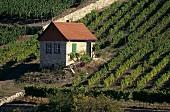 Little house in vineyard near Freyburg, Saale-Unstrut, Germany