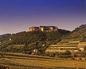 Vineyards with 'Schloss Neuenburg', Freyburg, Saale-Unstrut, Germany