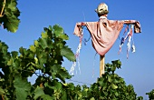 Scarecrow in a vineyard