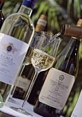 Pouring Sella & Mosca white wine, Alghero, Sardinia, Italy