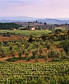Blick auf Felsina, Chianti Classico Riserva, Castelnuovo Berardenga, Toskana, Italien