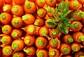 Gekochte und tournierte Karotten