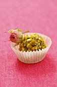 Choclate truffle covered with pistachios