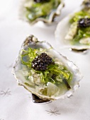 Oysters with algae and caviar