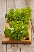 Young lollo biondo lettuce on a wooden board