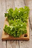 Young lollo biondo lettuce on a wooden board
