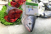 Fresh tuna on a market stall (Mercat de St. Josep (Boqueria), Las Ramblas, Barcelona, Spain)