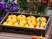 Pumpkins (variety 'Jack be Little') on wooden tray