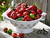 Tree chilli (Capsicum pubescens Rojo) in colander