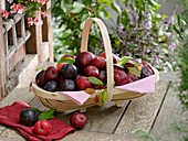 Fresh plums in trug