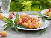 Aprikosen mit Blättern auf Teller