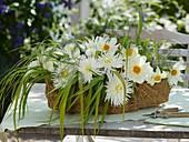 Dahlien, Gräser und Spargelkraut im Korb auf Gartentisch