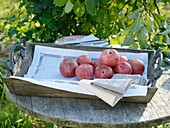 Pluot (cross between plum and apricot) in wooden box
