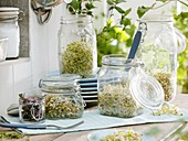 Various sprouting seeds in jars