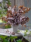 Kirschpflaume (Sorte Hollywood ) als Blumenstrauss in Vase