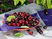 Sweet cherries (variety 'Sam') in dish on garden table