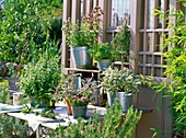 Herbs (sage, rosemary, oregano and mint) on a table in front of a garden shed