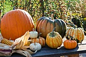 Assorted pumpkins and corn on the cob on garden table