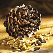 Pine cone and pine nuts