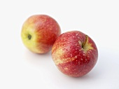 Two apples (variety 'Gala')
