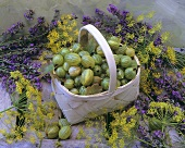 Gooseberries in a small basket with dill and lavender flowers