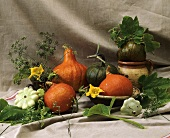 Various types of pumpkins and fennel
