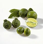 Limes (Persian limes, kafir limes and mini-limes)