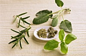 Aromatic herbs; rosemary, sage, basil