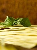 Basil and sheets of lasagne