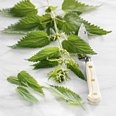 Nettle stalk with a knife