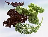 Kale, green and purple varieties