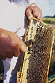 Beekeeper working on a honeycomb