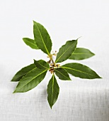 A sprig of bay leaves
