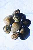 Various types of shellfish