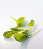 Japanese salad (Mizuna)