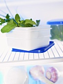 Herbs in plastic containers in fridge