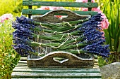 Bunches of lavender on a tray in garden